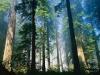 La foresta d'origine